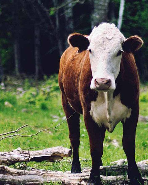 protect-livestock