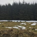 Wicklow 'plague': Farmers call for increased TB testing on deer